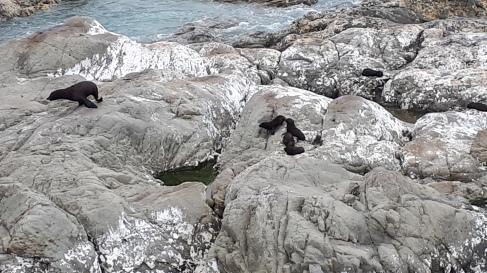 21 baypapa beach seehunde