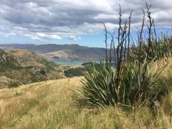 6 mt pleasant scenic reserve